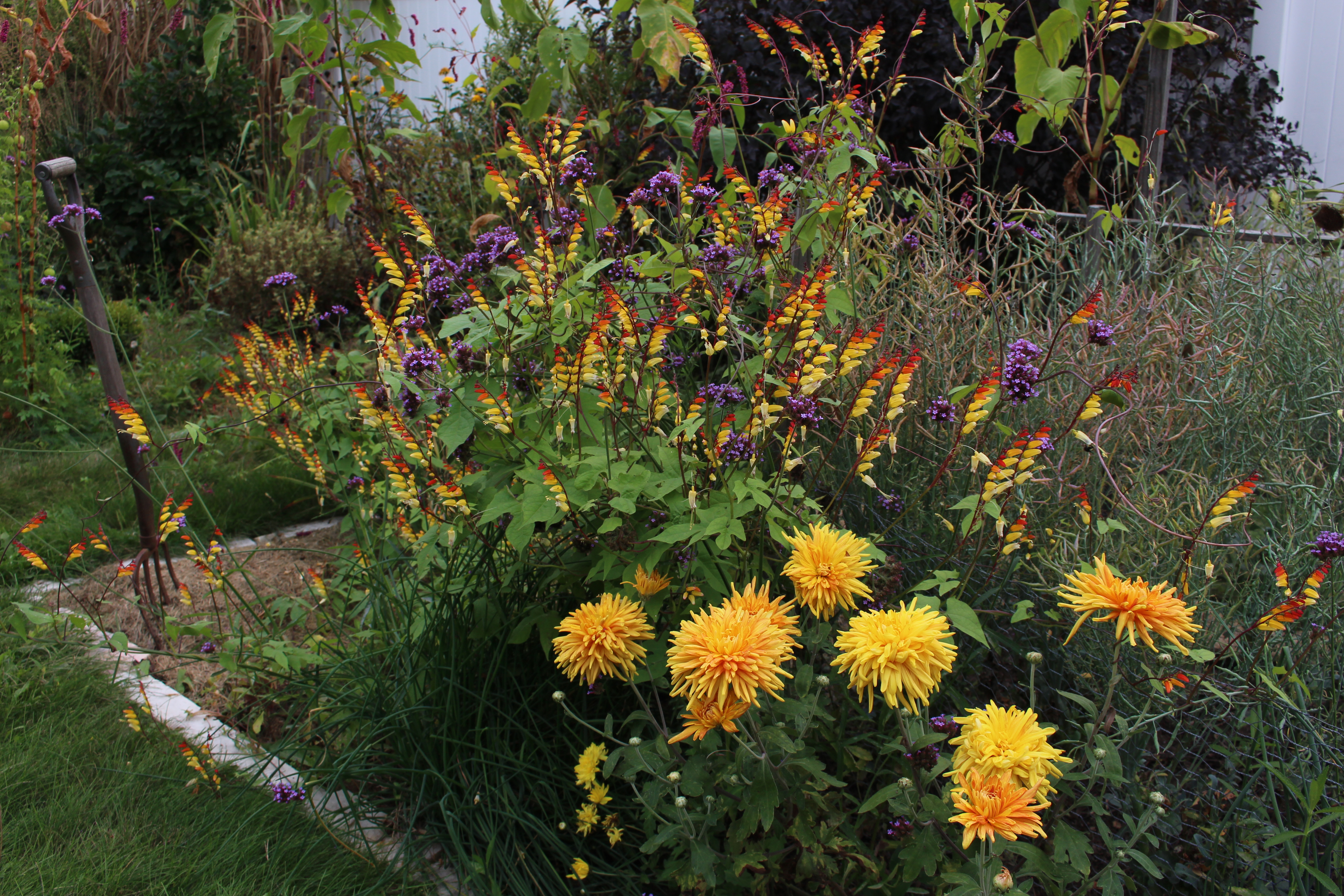 Make way for Monarchs « sorta like suburbia
