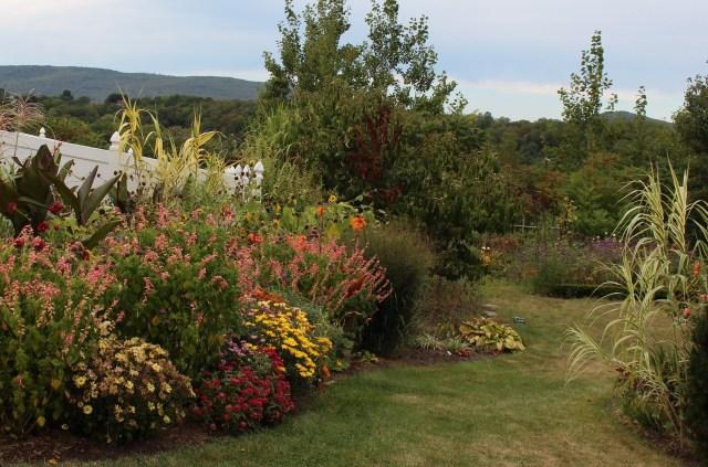 peach salvia annaul planting