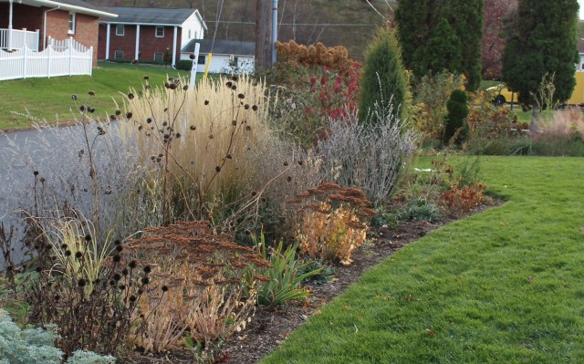 the front border in autumn