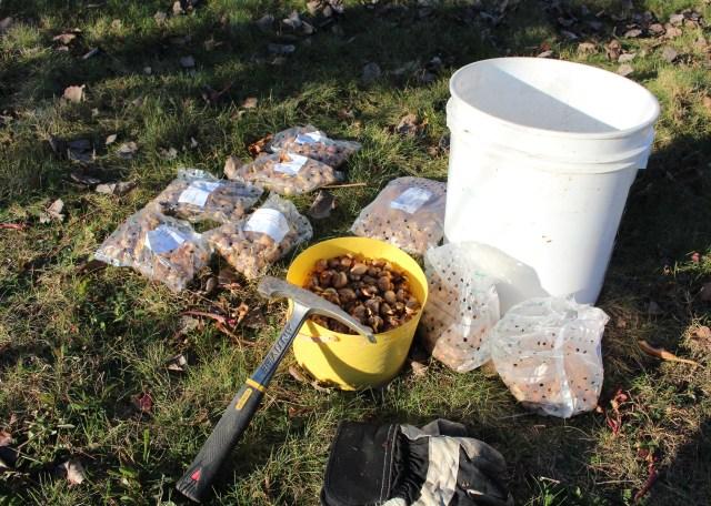 naturalizing crocus bulbs