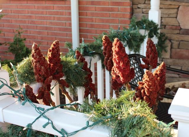 staghorn sumac winter decoration