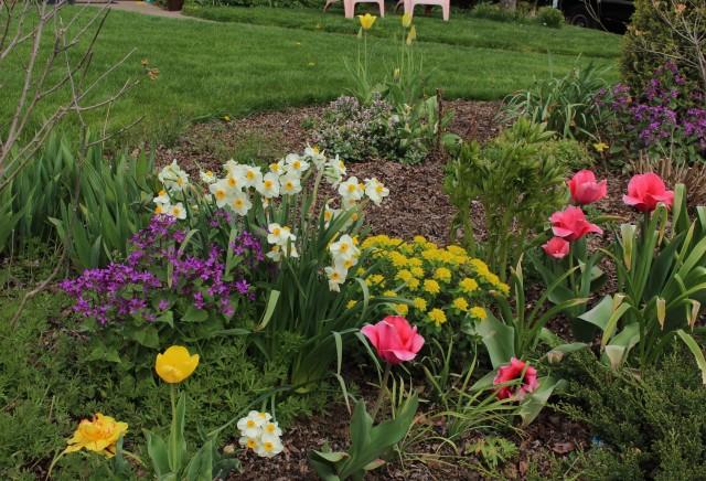 narcissus geranium daffodil