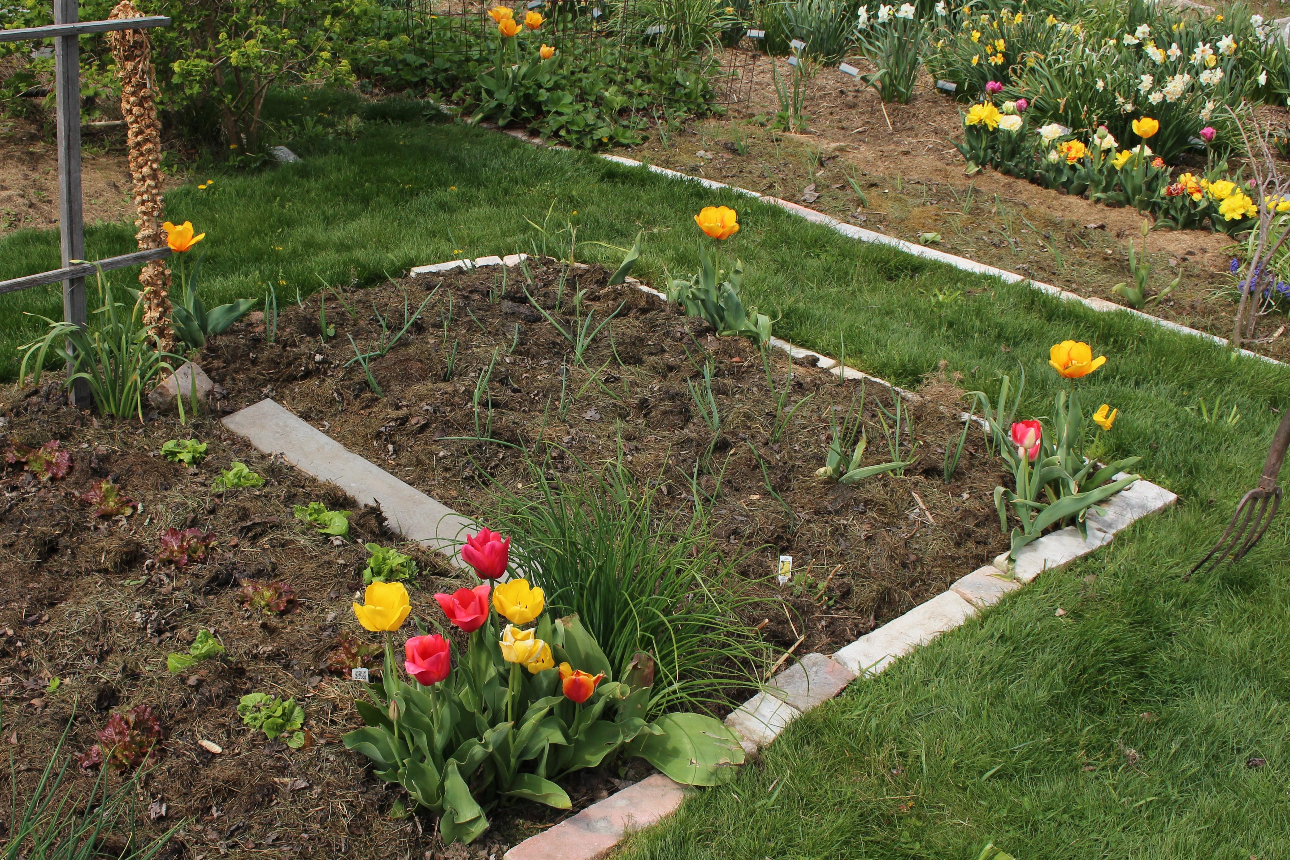 vegetable garden « sorta like suburbia