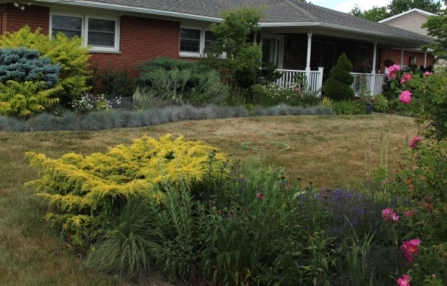 blue fescue border