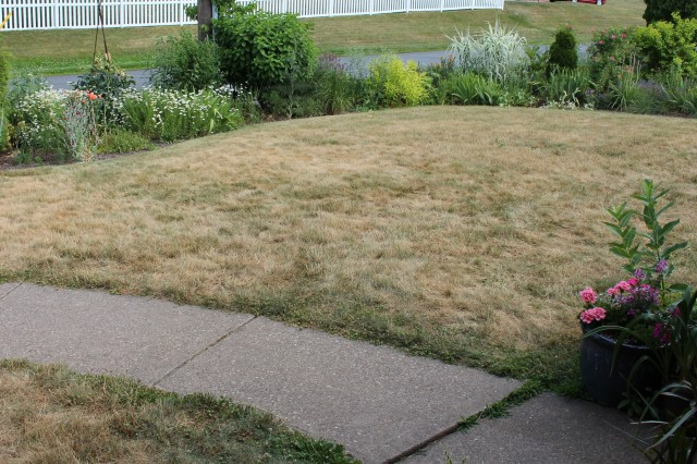 dormant lawn
