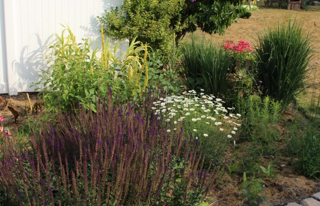 July perennial border