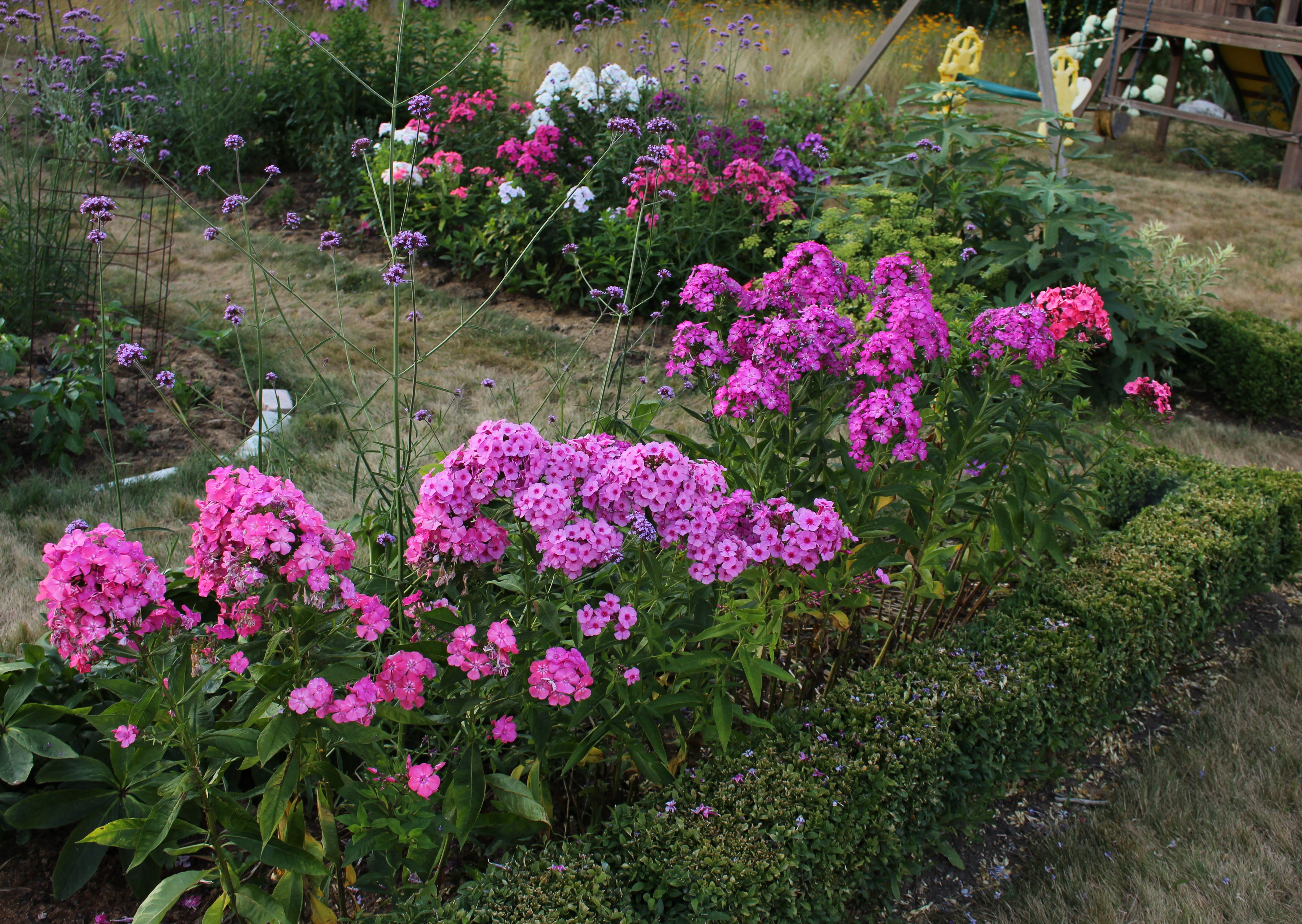 here petals wings and garden tall phlox summer