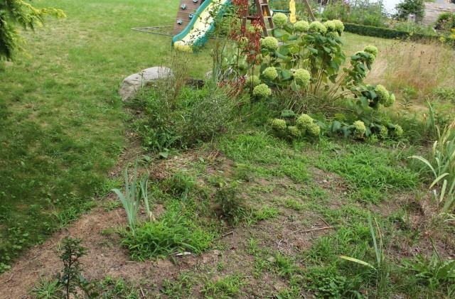 crabgrass weed