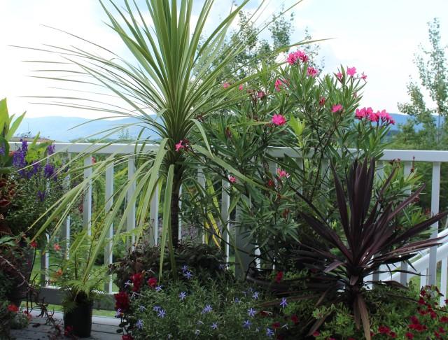 deck planters