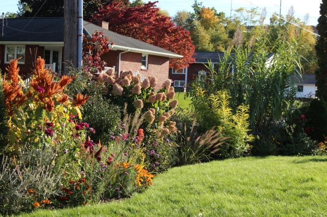 limelight hydrangea in autumn
