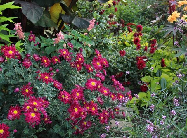 chrysanthemum carousel