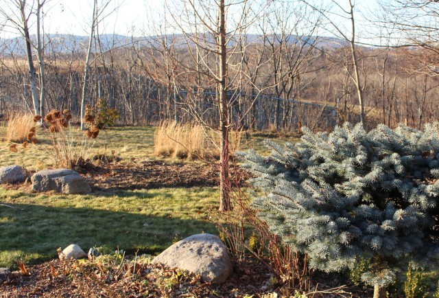 winter interest garden
