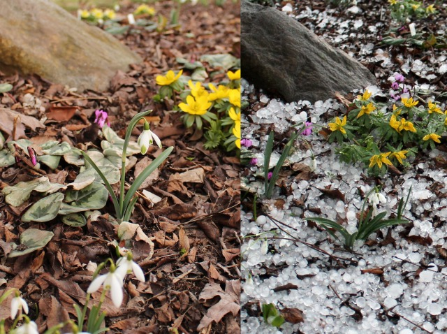 before and after hail