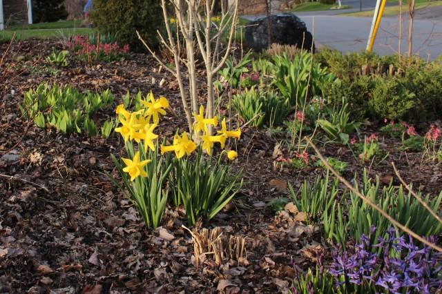 spring mixed border