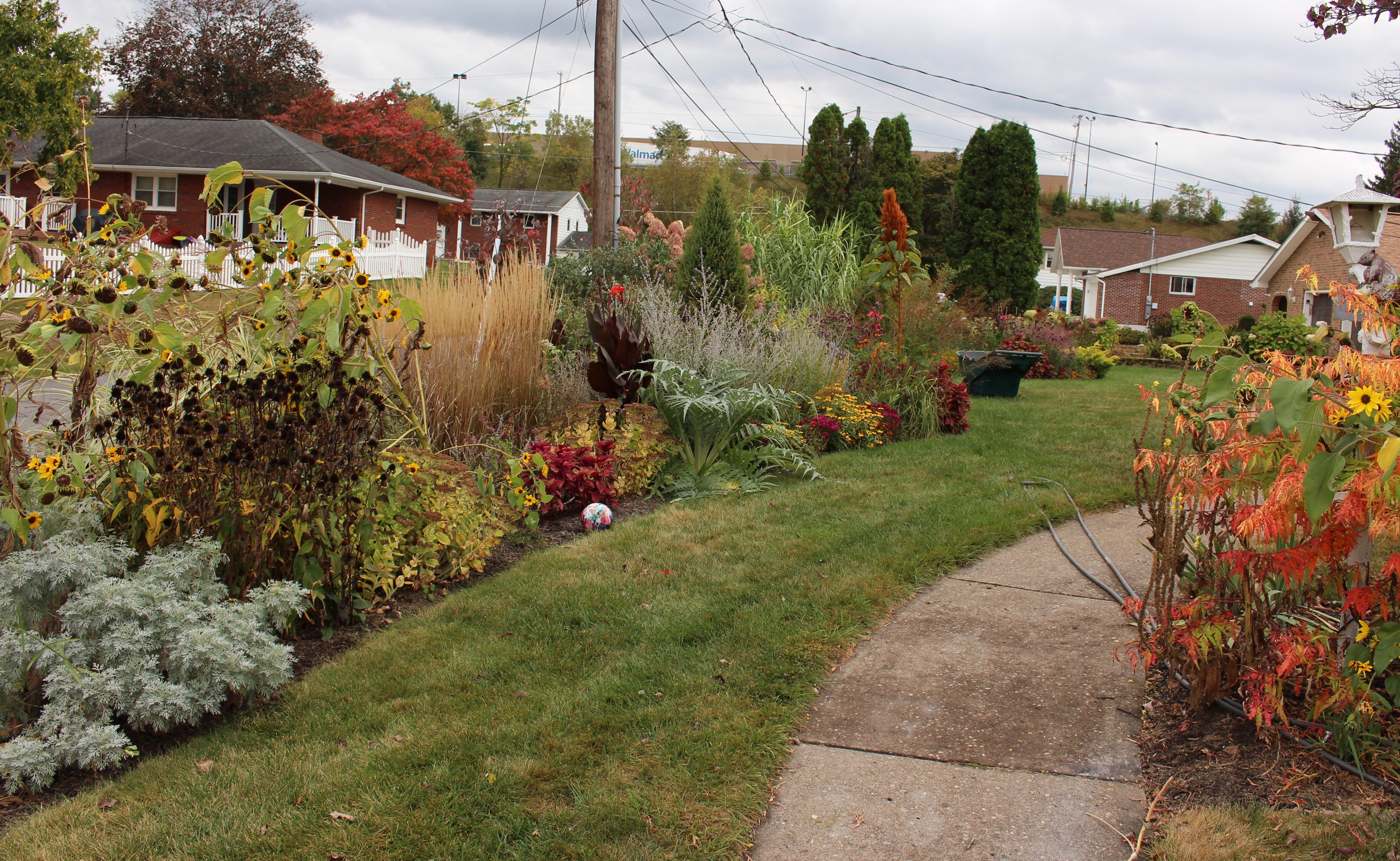 autumn flowers « sorta like suburbia