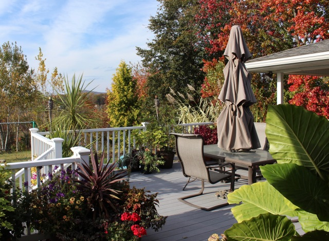 The back deck in autumn
