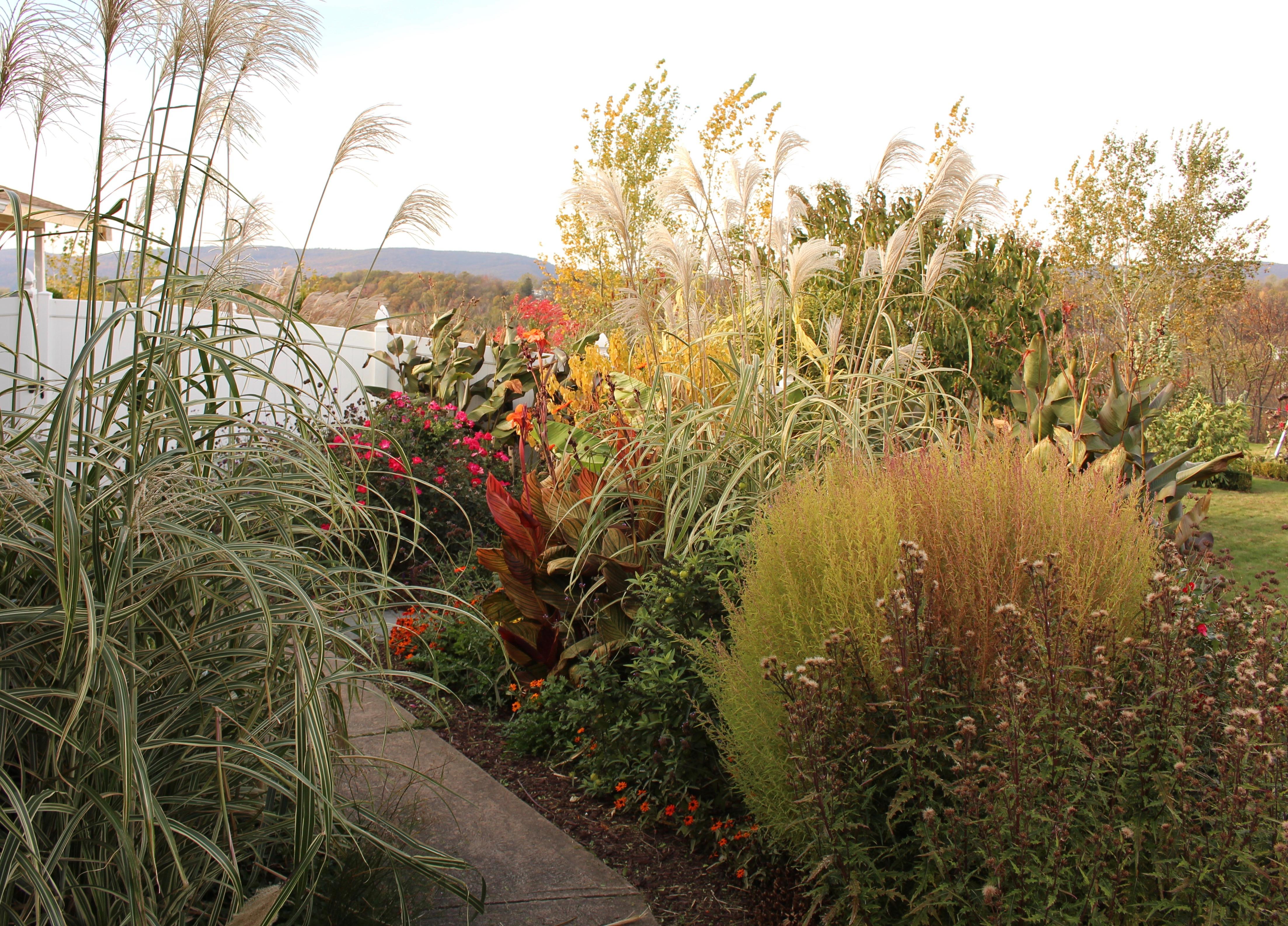 meadow garden « sorta like suburbia