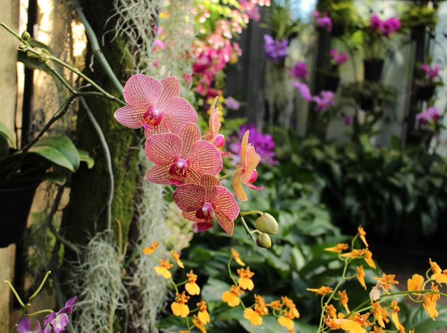 longwood orchids