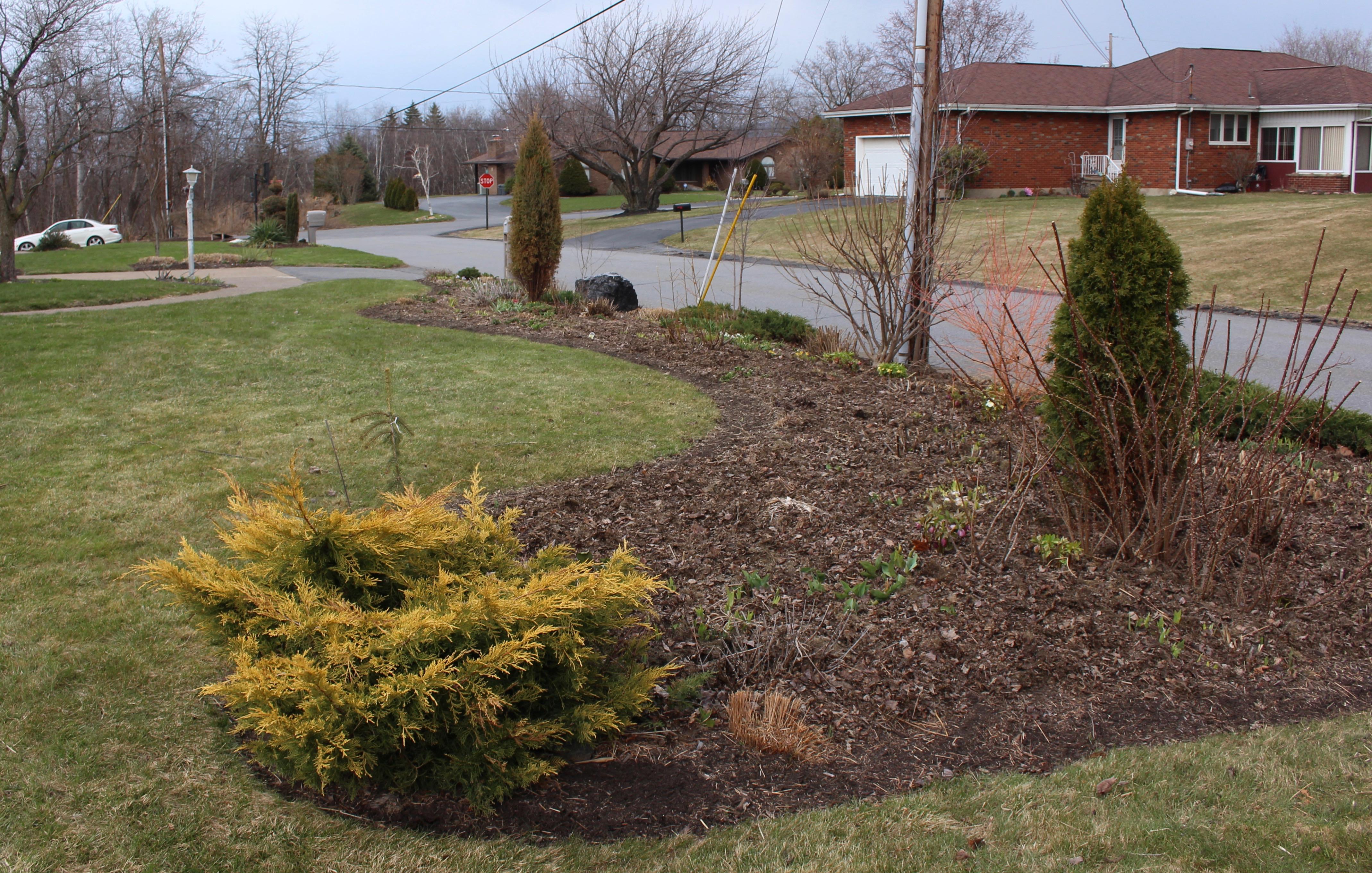 spring bulbs « sorta like suburbia
