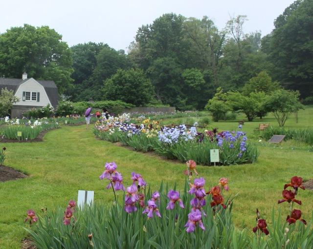 presby memorial iris gardens