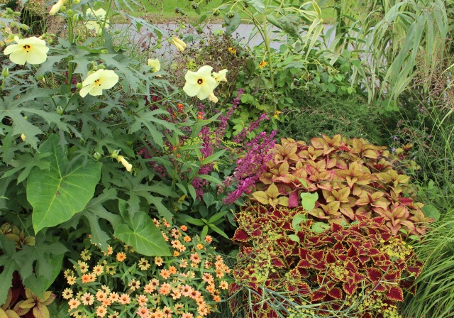 coleus in a border