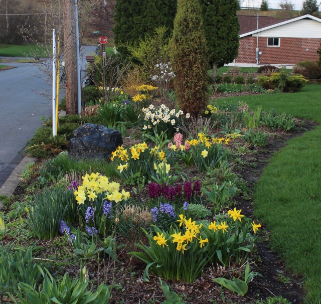 perennials and spring bulbs