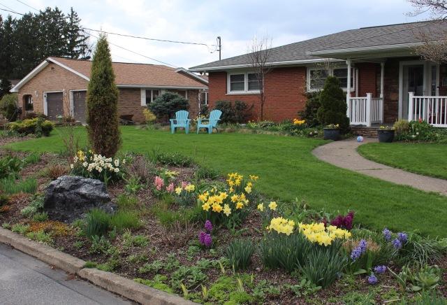 perennials and spring bulbs