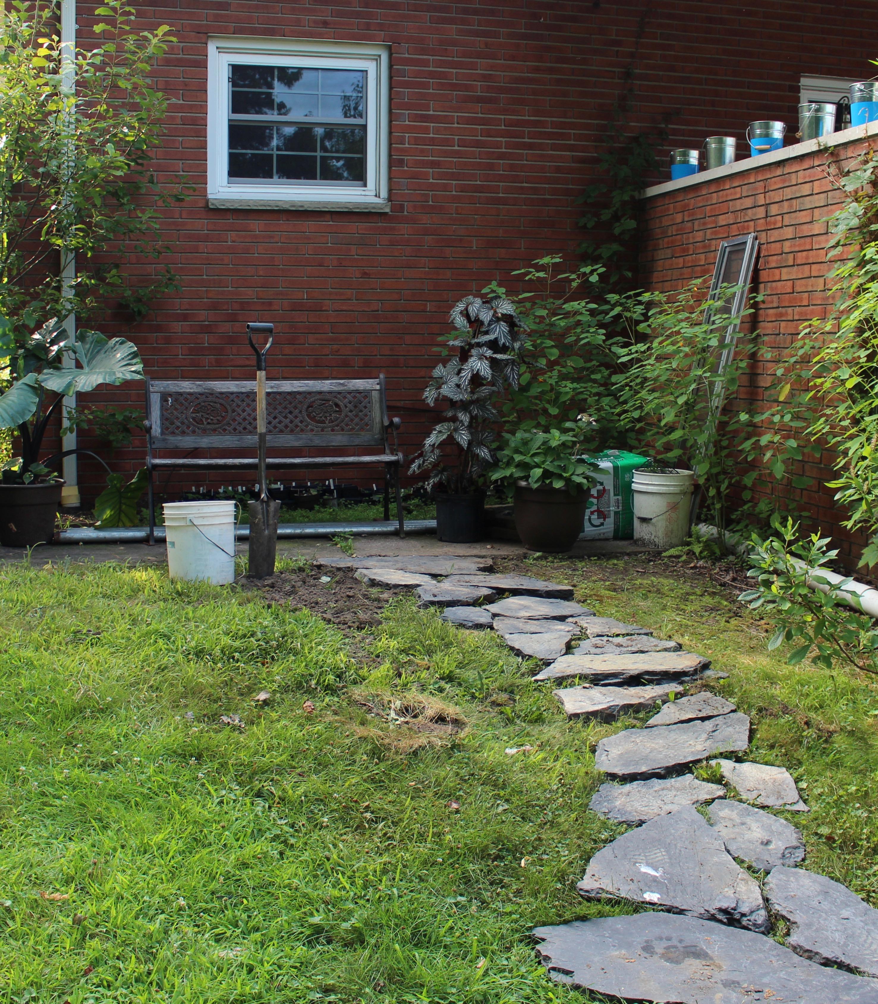 hellebore garden