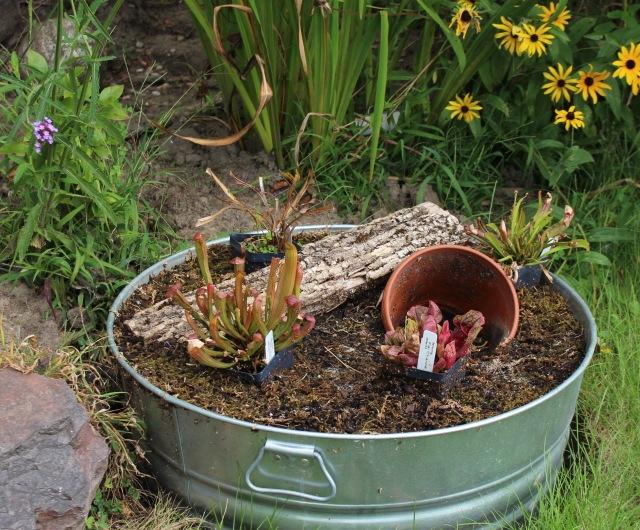 bog container garden