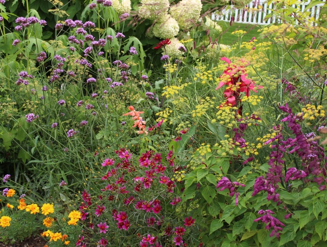 coreopsis and salvia
