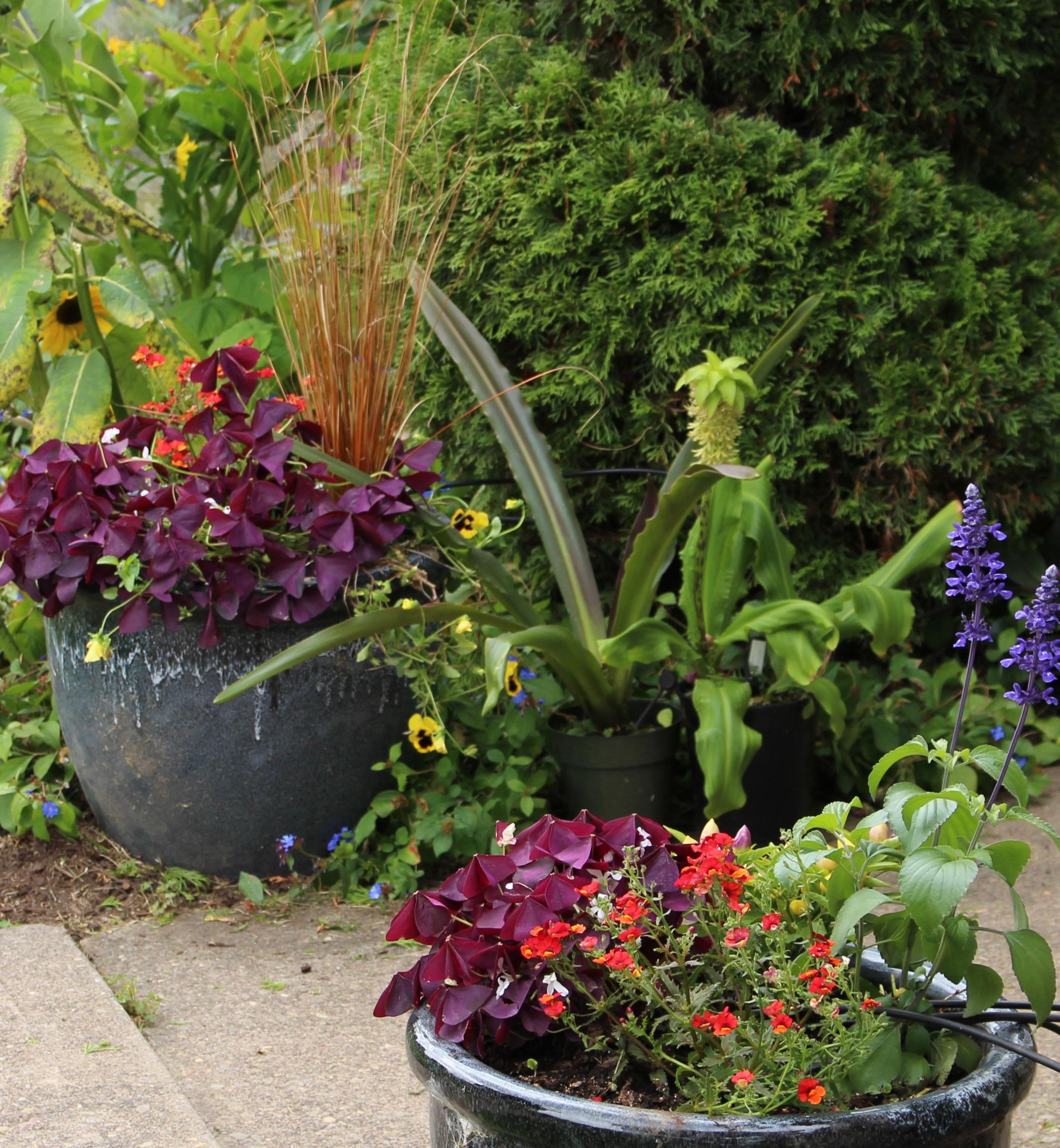 autumn planters