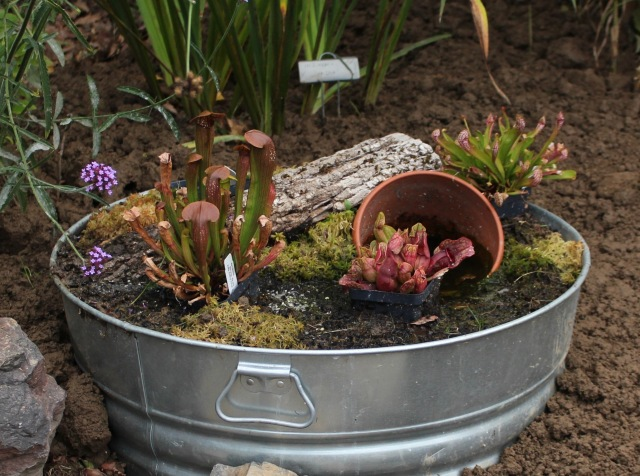 container bog garden