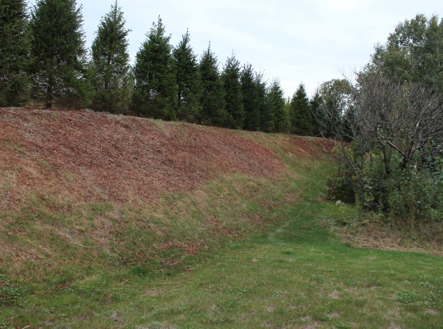 spruce on berm