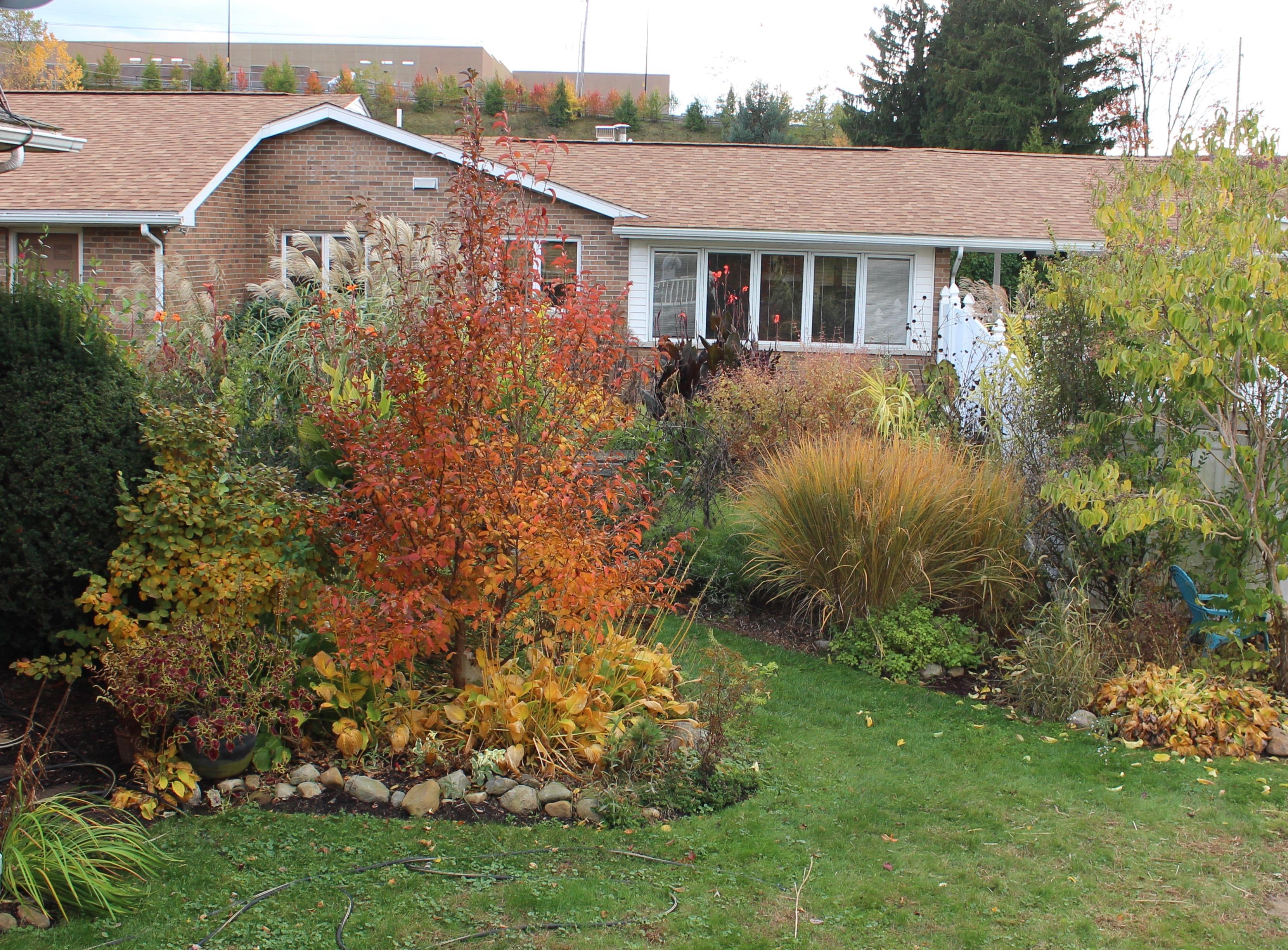 autumn garden color