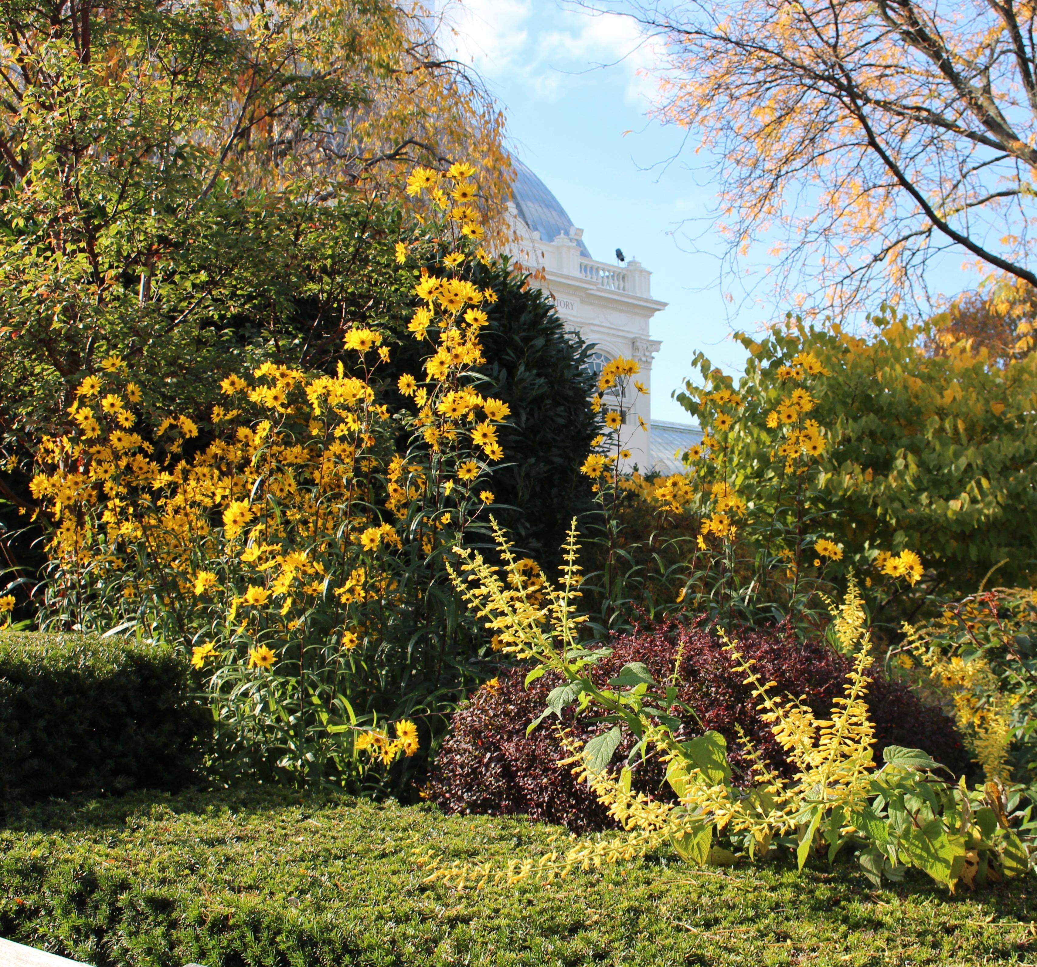 ny botanical garden autumn