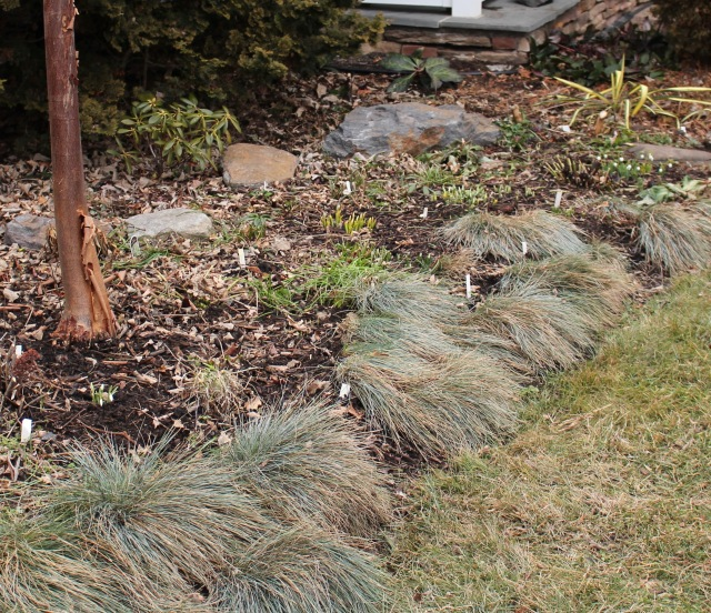 late winter garden cleanup