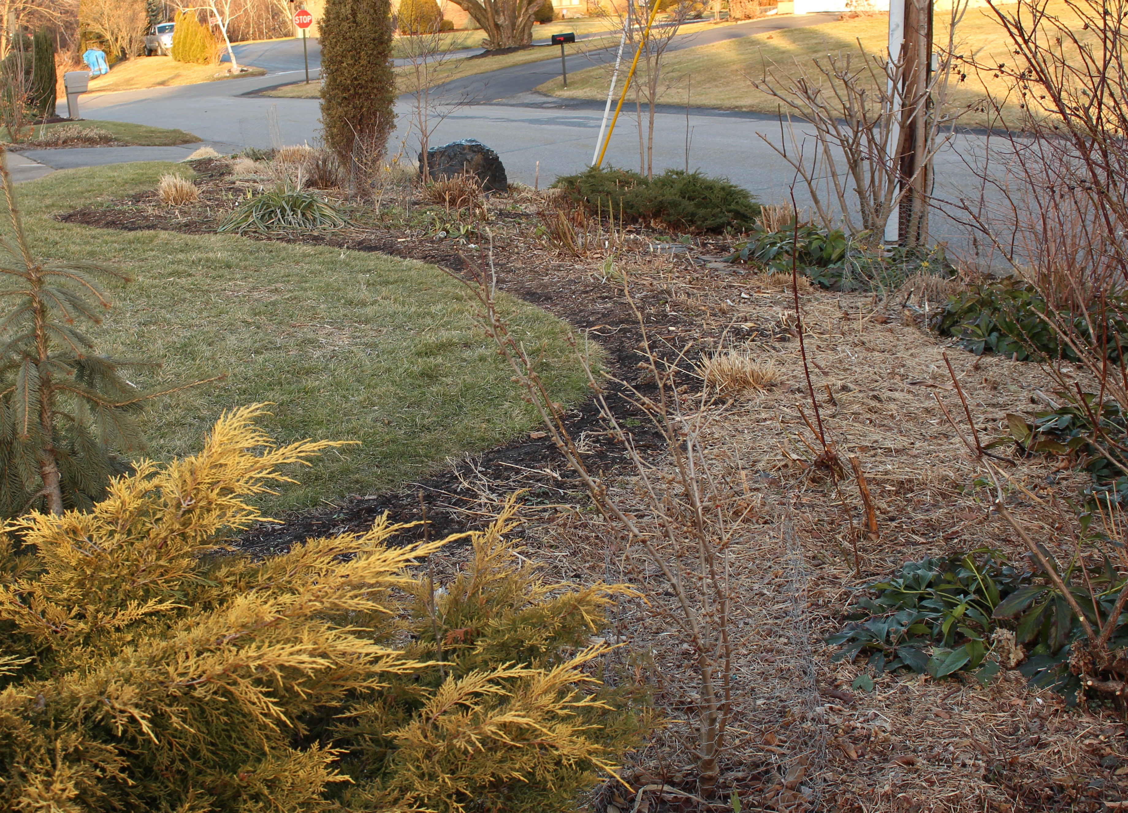 perennial bed cleanup