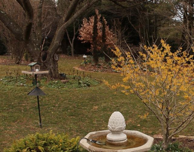 winter garden northeast