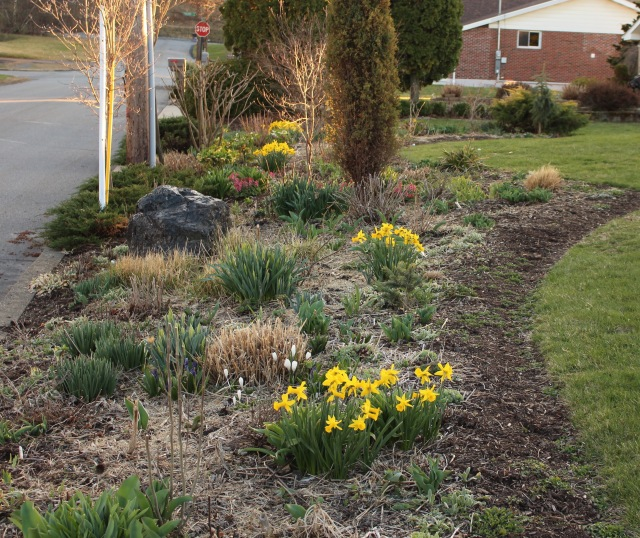 spring bulb border