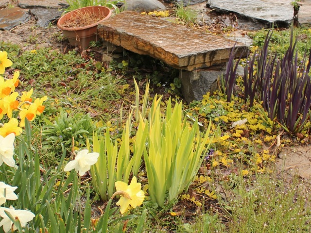 gerald darby iris