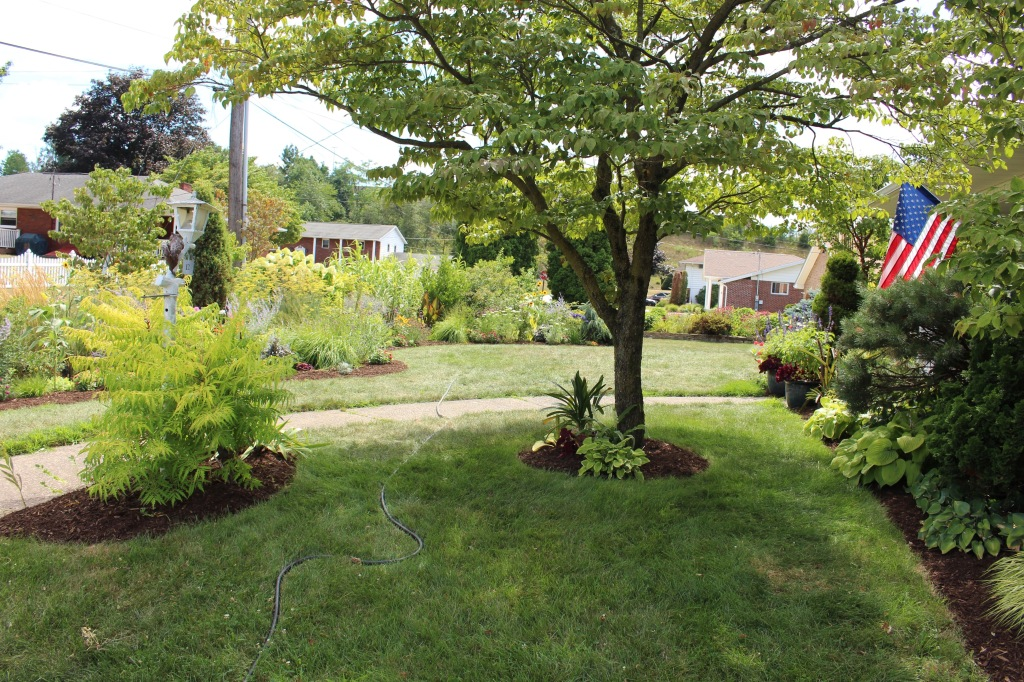 Edged and mulched, the front yard looks very... neat.