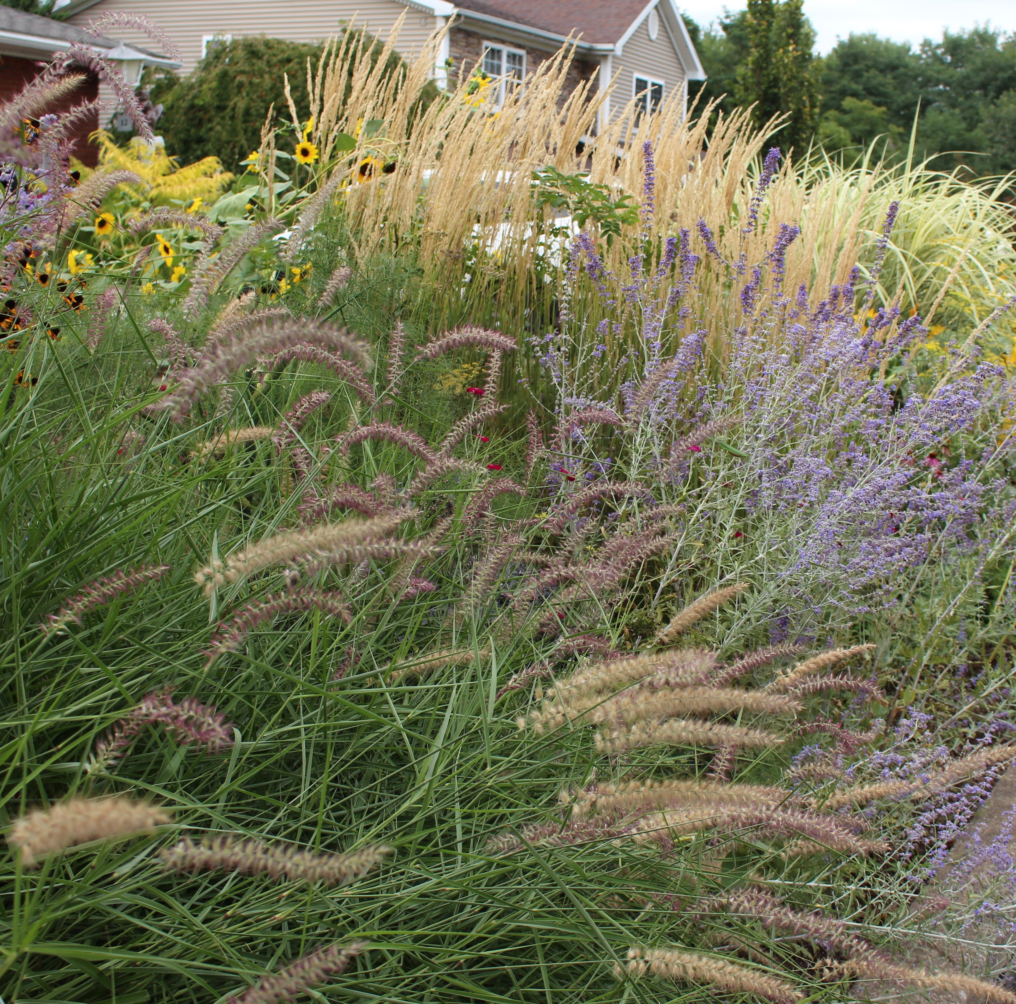 ornamental grass border