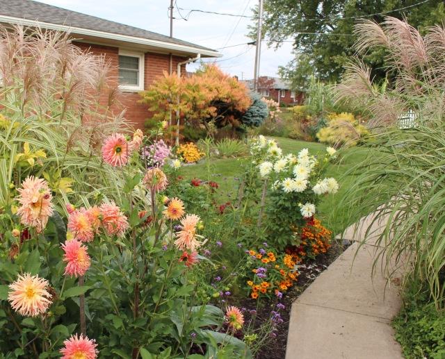 autumn dahlia garden