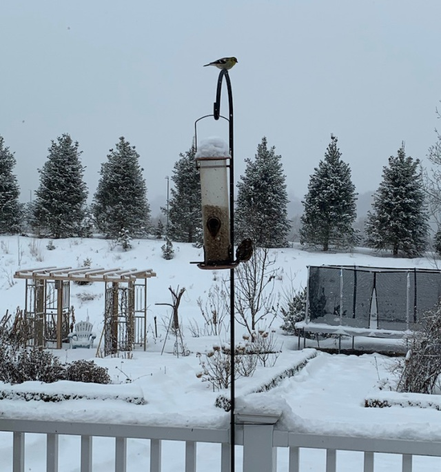 winter bird feeder