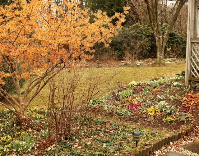 american snowdrop garden