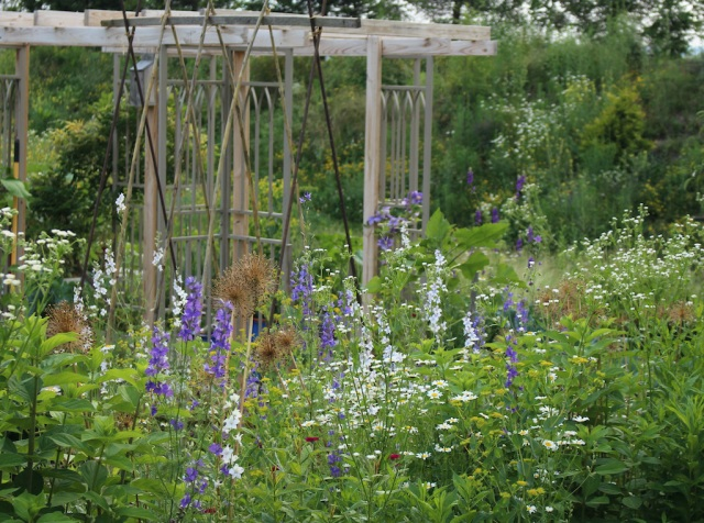 larkspur and daisies