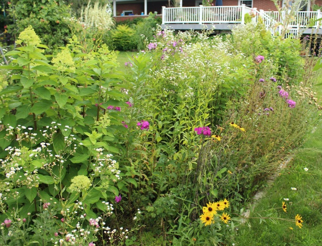 overgrown flower bed
