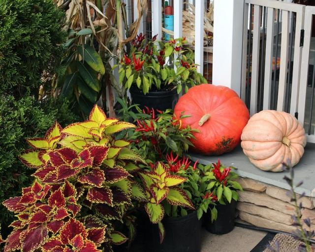 autumn porch display
