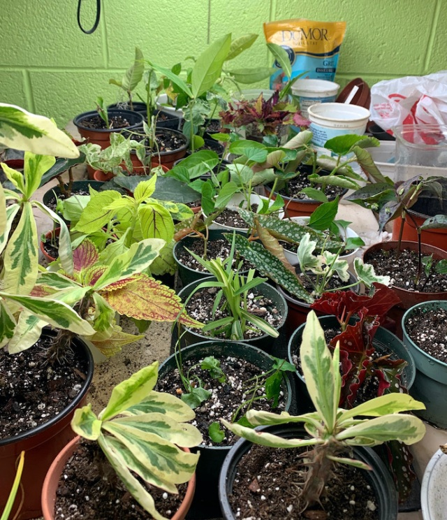 taking cuttings to overwinter